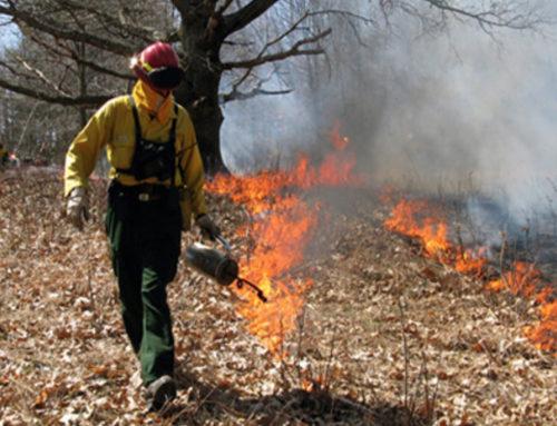 National Park Scheduled Prescribed Burns in Stehekin Valley