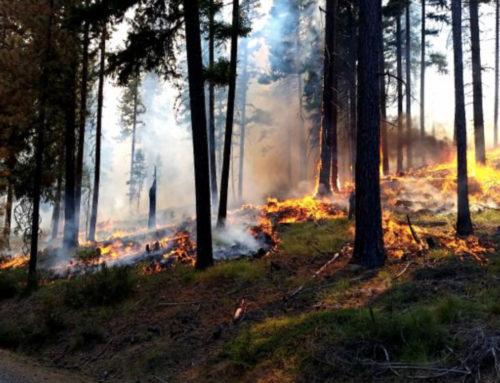 Okanogan-Wenatchee Forest Plans Prescribed Burns
